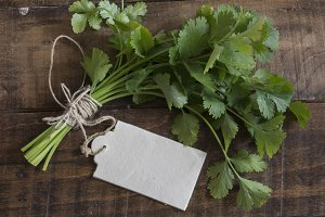 coriander or cilantro