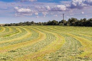 Freshly mown hay under dramatic sky