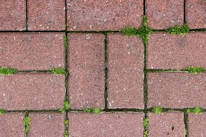 Paving stone with moss sidewalk