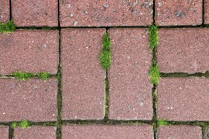 Paving stone with moss