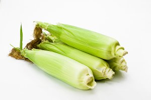 Fresh sweet corn in husk
