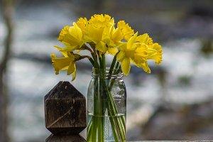 Daffodil flowers in mason jar