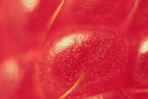 Raspberry Macro Closeup.