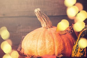 Pumpkin closeup. Autumn Bokeh lights background. Thanksgiving or Halloween concept, copy space