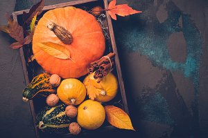 Tray with variety of decorative pumpkins. Autumn, Thanksgiving or Halloween concept, copy space