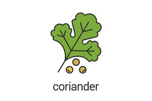 Coriander color icon