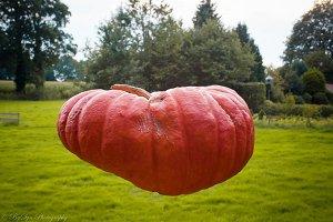 Magic pumpkin