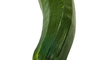 Zucchini squash