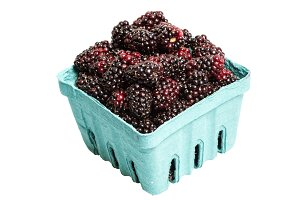 Marionberries isolated