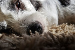 Zenn dog