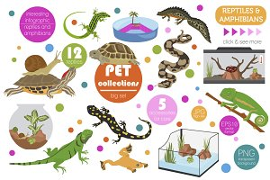 Pet reptiles and amphibians set