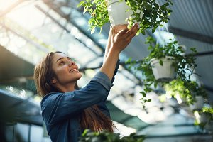 Young lady gardener hanging plants in her owner operated greenhouse flower shop