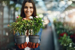 Young lady gardener holding plants in pots trying to sell them in her newly built greenhouse shop. Sales concept.