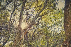 The sun Among the trees in Forest