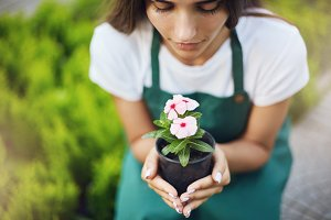 Close-up of female gardener holding a flower in a pot. Care concept.