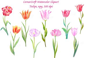 Watercolour Tulip Spring Flowers