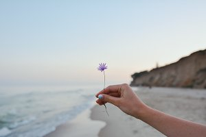 Flower Between Sea and Sand