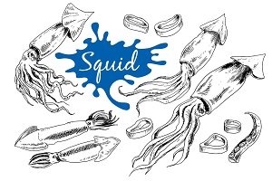 Squid. Hand drawn ink set