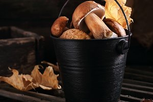 porcini in a black bucket
