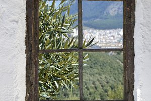 olive grove behind the window