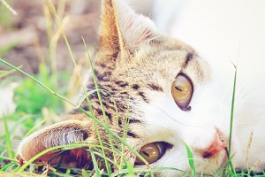 cat lying on green grass