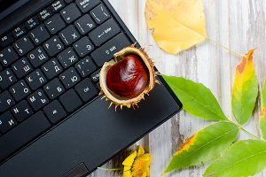 Chestnut in shell lies on laptop