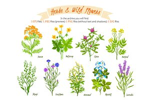 Herbs and Wild Flowers Set