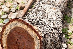 Dry logs.