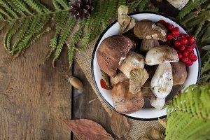 fresh mushroom boletus