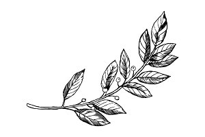 Laurel branch engraving vector illustration