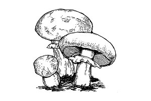 Mushrooms engraving vector illustration