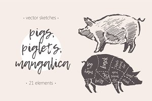 Illustrations of pigs, piglets & etc