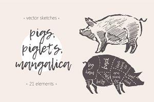 Illustrations of pigs, piglets & etc