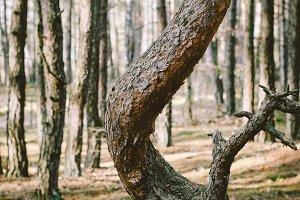 Ampersand tree