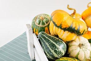 set of mix decorative pumpkins