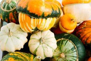 mix of decorative pumpkins