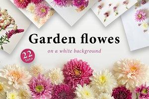 Garden flowers. 22 foto