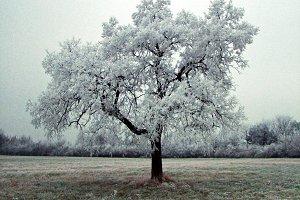 A Single Tree