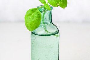 A sprig of lemon basil in an old bottle on a light background.