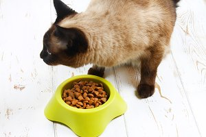 A Siamese Thai cat eats dry food from a yellow-green plastic bowl on a white wooden floor.