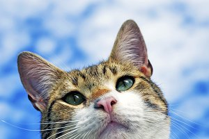cat with sky background