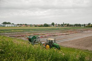 The tractor next to the fields with flowers