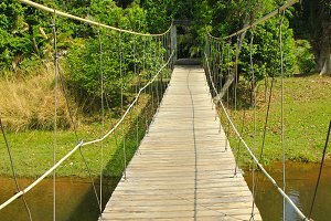 Bridge to the jungle