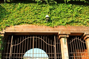 Doorway surrounding with green ivy