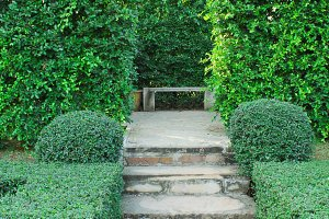 Steps pathway with green hedge