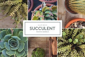 Savory Succulent • Photo Bundle