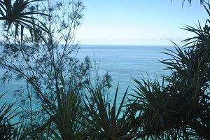 Palm Ocean Silhouette