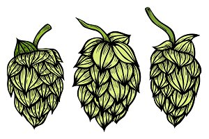 engraving style Hops set