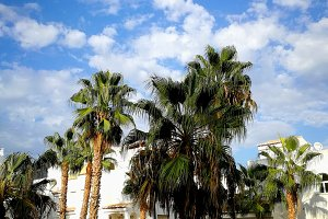 blue sky, palm trees and apartments