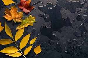 Colorful Autumn leaves on dark background